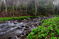 Second Pond Brook, Siamese Ponds Wilderness Area, Adirondack Forest Preserve, New York