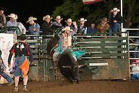 SEBRA - Gordonsville, VA - 5.14.2016 - Bulls & Action