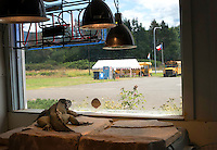 A Rhino Iguana named &quot;Doc&quot; stares out the window of it's enclosure towards a parking lot at the Reptile Zoo in Monroe, Wash. on July 13, 2016. A sign posted on its enclosure said rhino iguanas come from the &quot;Carribean Island of Hispaniola&quot; and live in &quot;scrub woodlands, dry forests, and rocky habitats.&quot; Another sign says that this species is listed as &quot;VULNERABLE&quot; on the IUCN Red List due to: human persecution, collection for food, importation for captive keeping purposes, and predation by invasive species (especially cats).<br />