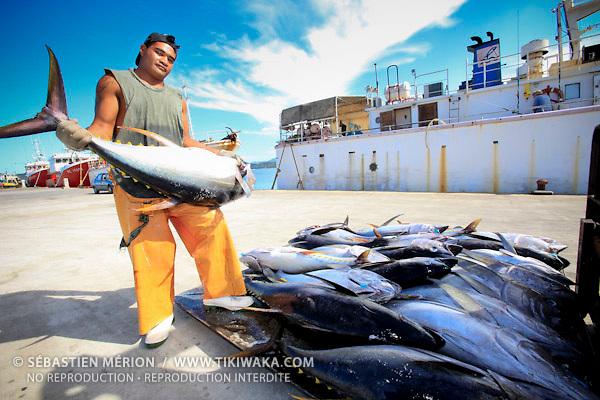 Déchargement du thonier à quai, Nouméa