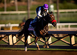 OCT 25:Breeders' Cup Juvenile Fillies entrant Lazy Daisy, trained by Doug F. O'Neill,  works under Rafael Bejarano at Santa Anita Park in Arcadia, California on Oct 25, 2019. Evers/Eclipse Sportswire/Breeders' Cup