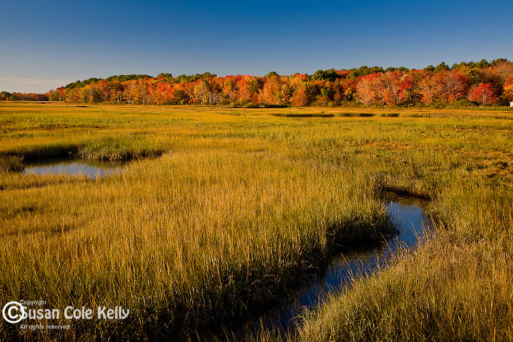 Autumn on the Webhannet River Marsh, Rachel Carson National Wildlife Refuge, Wells, ME, USA