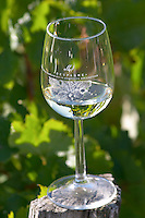 Wine glasses. Despagne Vineyards and Chateaux, Bordeaux, France