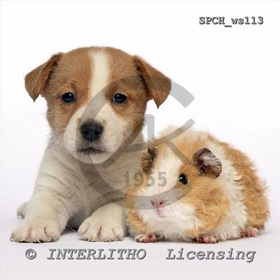 Xavier, ANIMALS, fondless, photos, SPCHWS113,#A#
