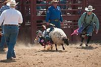 VHSRA - Powhatan, VA - 4.13.2014 - Mutton Bustin'