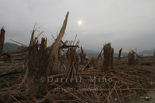 June 12, 2011, Rikuzentakata, Iwate Pref., Japan - A whole forest of pine trees are snapped like toothpicks after a tsunami wiped out the coast of Rikuzentakata after the magnitude 9.0 Great East Japan Earthquake and Tsunami that devastated the Tohoku region of Japan on March 11, 2011.