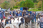 3938-3947.Wheeling and dealing at the Horse Fair in Gap of Dunloe on Sunday
