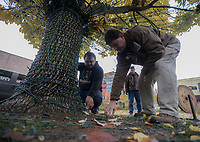NWA Democrat-Gazette/CHARLIE KAIJO Bentonville Parks and Recreation employees Jimmy Hutchison and Frank Taylor (from right) discuss how to install lights, Monday, November 5, 2018 at the downtown square in Bentonville.<br /><br />City employees from the Bentonville Parks and Recreation department are installing 22 miles of lights along the large trees and ground at the square, in front of the Benton County court house and Lawrence Plaza. Workers expect to finish the installation next week.