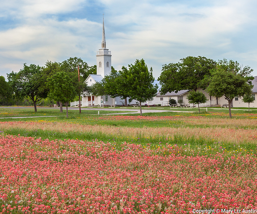 Seguin, Guadalupe County, TX: Field of Indian paintbrush with Christ Lutheran Church of Elm Creek in the distance