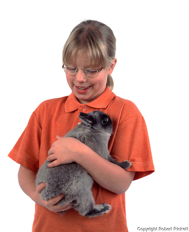 Young Girl Holding Pet Rabbit, Grey colour, aged 10 years old, domestic, white background, cut out, studio