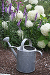 Galvanized watering can in garden