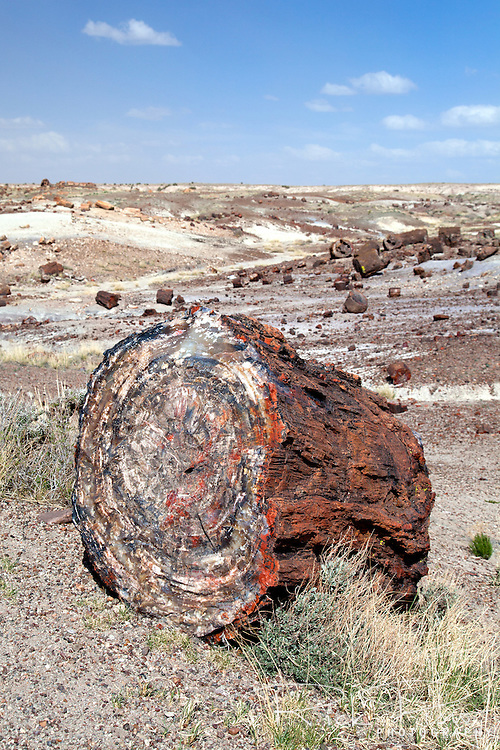 Petrified section of a tree at Petrified Forest National Park in Arizona.