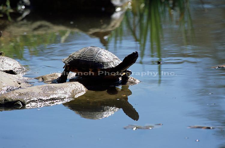 Garden Turtle - Alice Keck Park, Santa Barbara