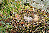 """New Life: Gull Chick""<br />