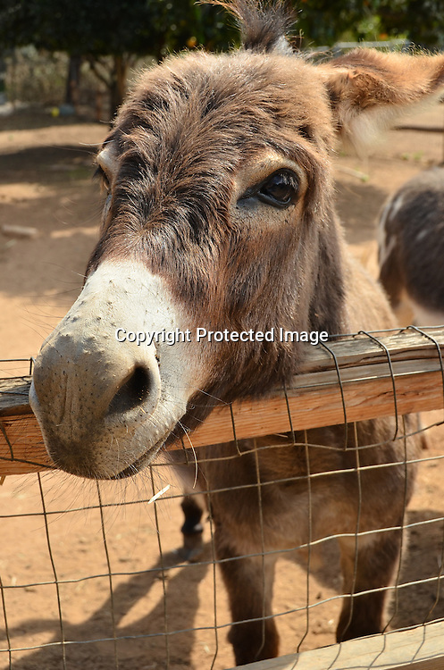 Stock photo of Donkey