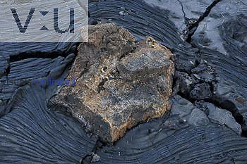 Pyroclastic rock on basalt lava, 105 years old, Sullivan lava flow, James Island, Galapagos Islands.