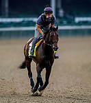 September 1, 2020: Storm The Court exercises as horses prepare for the 2020 Kentucky Derby and Kentucky Oaks at Churchill Downs in Louisville, Kentucky. The race is being run without fans due to the coronavirus pandemic that has gripped the world and nation for much of the year. Scott Serio/Eclipse Sportswire/CSM