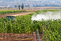 A vineyard tractor spraying with treatment for diseases between the rows of vines. Vranac grape variety. Vineyard on the plain near Mostar city. Hercegovina Vino, Mostar. Federation Bosne i Hercegovine. Bosnia Herzegovina, Europe.