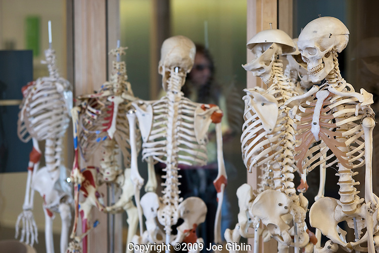 Skeletons hang  in a new biology lab on the campus of the University of Rhode Island. (Photo/Joe Giblin)
