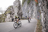 Matteo Trentin (ITA/Michelton-Scott) taking Adam Yates (GBR/Mitchelton-Scott) in tow in the approach towards the Madonna del Ghisallo (754m)<br /> <br /> 113th Il Lombardia 2019 (1.UWT)<br /> 1 day race from Bergamo to Como (ITA/243km)<br /> <br /> ©kramon