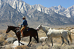 leading horse near Mt. Whitney