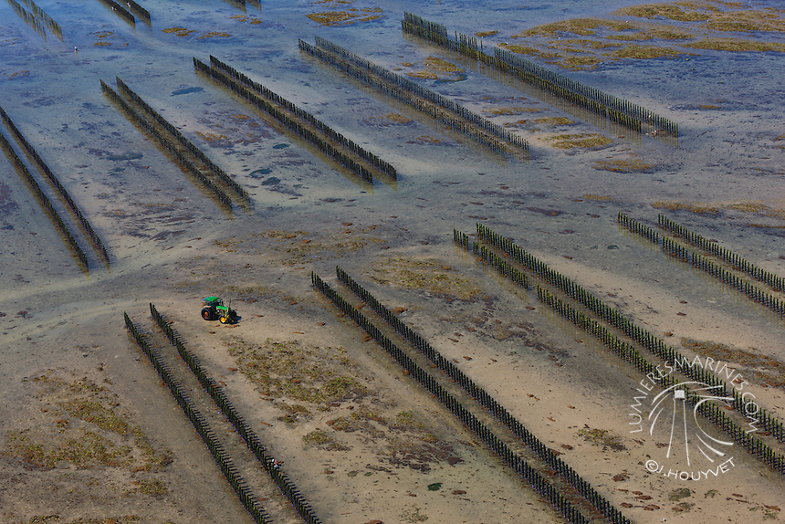 France, Normandie, Manche (50), conchlyliculture, myticuluture (vue aérienne) // France, Normandy, Manche, mussles (aerial view)