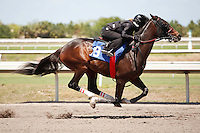 #18Fasig-Tipton Florida Sale,Under Tack Show. Palm Meadows Florida 03-23-2012 Arron Haggart/Eclipse Sportswire.