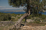 At some point in earth's history it must have rained rocks on Hvar Island.