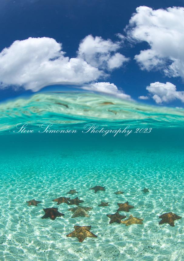 Split level starfish<br /> Pincushion starfish<br /> St. John<br /> Virgin Islands