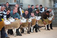 25.8.2018 Texel Sheep Society Welsh National