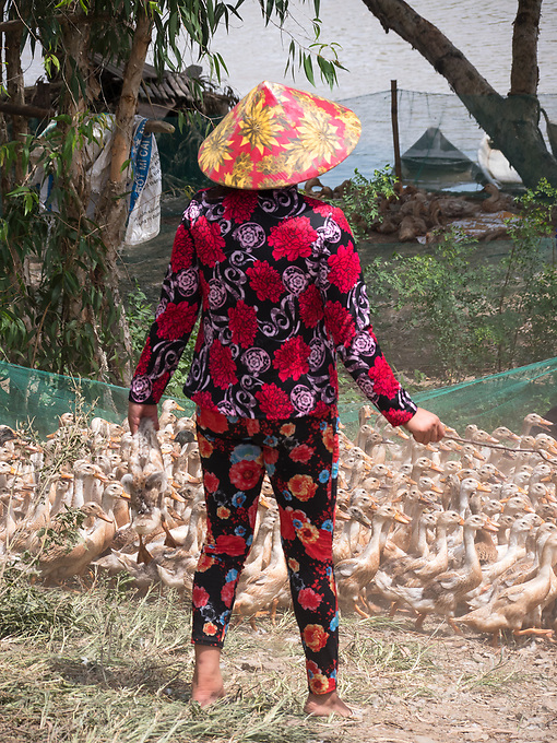 Loading Duks on to river barges in the Mekong Delta near Bac Lieu, Vietnam.