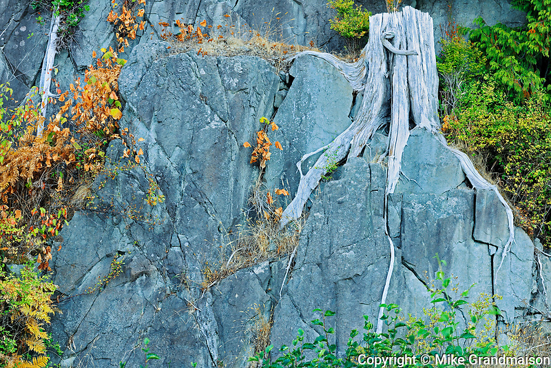 Tree roots and rock, Skidegate, British Columbia, Canada