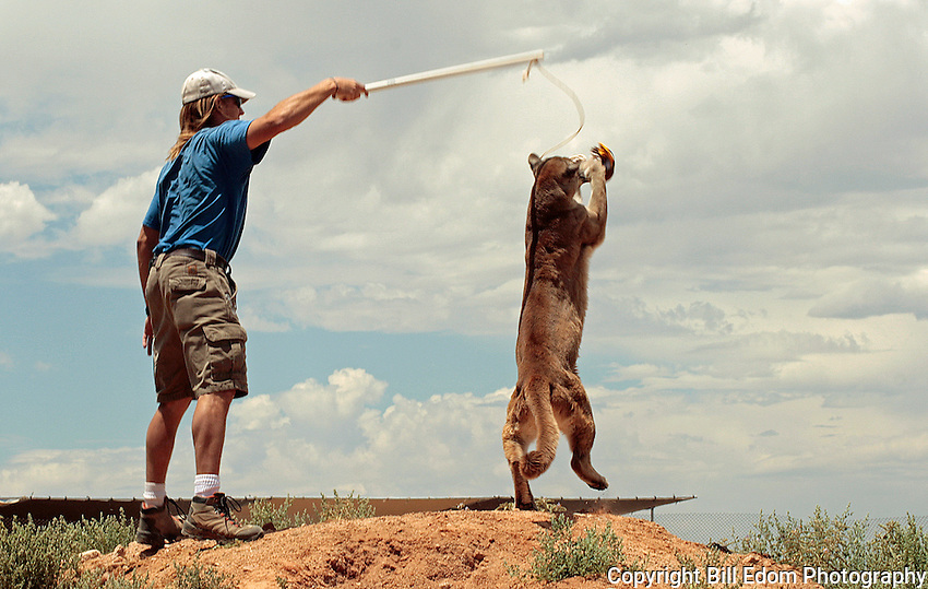 Steak on a string makes for a great cat toys for really big cats.
