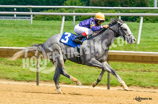 Driving Me Crazy winning at Delaware Park on 7/6/16