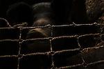 La Terra di Lavoro &egrave; una regione storico-geografica -sociale  legata alla Campania.<br /> La provincia di Terra di Lavoro era, gi&agrave; alla fine dell'ottocento,  una delle pi&ugrave; vaste d'Italia,comprendente parte del Lazio e gran parte della Campania.Tra i centri principali erano Caserta, Santa Maria Capua Vetere, Capua, Gaeta,Aversa, Sora, Isola del Liri, Fondi, Nola, Teano.<br /> Questo lembo di terra campana, scelta per gli ozi dall'aristocrazia imperiale romana, fu terra amara per i contadini che hanno visto nei secoli dominazioni e sfruttamento, con la condizione di vita sottoposta ai soprusi naturali e sociali sopravvivendo in una struttura sociale  per molti versi simile a quella Feudalistica  medioevale.<br /> Nei suoi terreni,  per i quali la Campania ha meritato l'appellativo di Felix , oggi quel lavoro legato al tempo ed alle stagioni &egrave; del tutto scomparso e la memoria di questa terra e di questa popolazione &egrave; conservata solo da chi, per scelta o necessit&agrave;, non &egrave; andato ad incontrare il futuro.<br /> Tracce della memoria del territorio restano impresse  nell'umile intimit&agrave; di una casa e nella storia di questa famiglia che soccombe al tempo e alle dominazioni.<br /> <br /> LA CASA DI FANGO<br /> E dai campi, ormai violetti, viene una luce che scopre anime, non corpi (...) Anime che riempiono il mondo,  come immagini fedeli e nude della sua storia, bench&eacute; affondino in una storia che non &egrave; pi&ugrave; nostra. Con una vita di altri secoli, sono vivi in questo (...) Ma ora per queste anime segnate dal crepuscolo, per questo bivacco di intimiditi passeggeri, d'improvviso ogni interna luce, ogni atto di coscienza, sembra cosa di ieri. (...) Gli &egrave; nemico il padrone che spera la loro resa, e il compagno che pretende che lottino in una fede che ormai &egrave; negazione della fede. (...) la luce che piove su queste anime &egrave; quella, ancora, del vecchio meridione, l'anima di questa terra &egrav