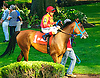 RB Madymosielle before The Buzz Brauninger Arabian Distaff (grade 1) at Delaware Park on 9/2/16