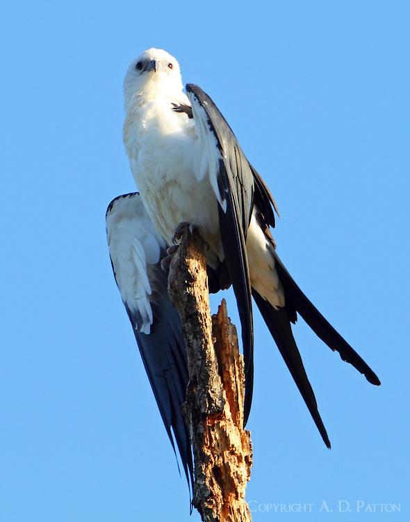Same bird, a little different pose