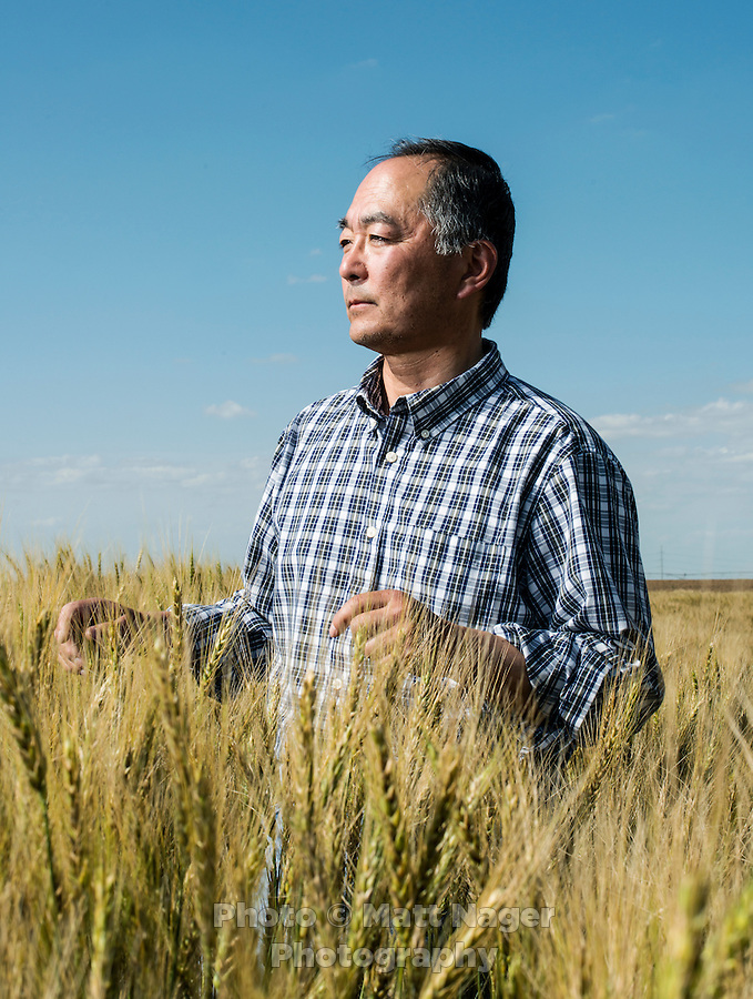 Owner of Sakata Family Farms, Robert Sakata on his farm in Brighton, Colorado, Thursday, June 19, 2015. Sakata Family Farms grows onion, barley, broccoli, sweet corn and cabbage.<br /> <br /> Photo by Matt Nager