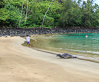 A woman gives a Hawaiian monk seal a wide berth as it arrives at Ke'e Beach in Ha'ena, Kaua'i. These seals are an endangered species.