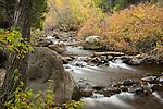 Idaho, South central, Twin Falls, rock Creek.  Rock Creek in autumn.