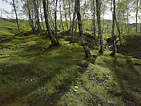 FOREST_LOCATION_90029