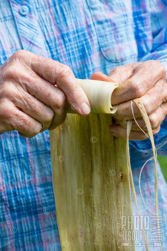Kapa making on the Big Island: A woman rolls a wauke (paper mulberry) strip into a bundle so it is ready to soak in sea water, in preparation to make kapa.