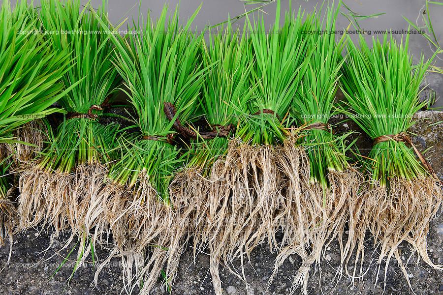 PHILIPPINES, Mountain Province, Cordilleras, Bontoc, rice farming / PHILIPPINEN, Mountain Province, Cordilleras, Bontoc, Reisanbau und Reisfelder