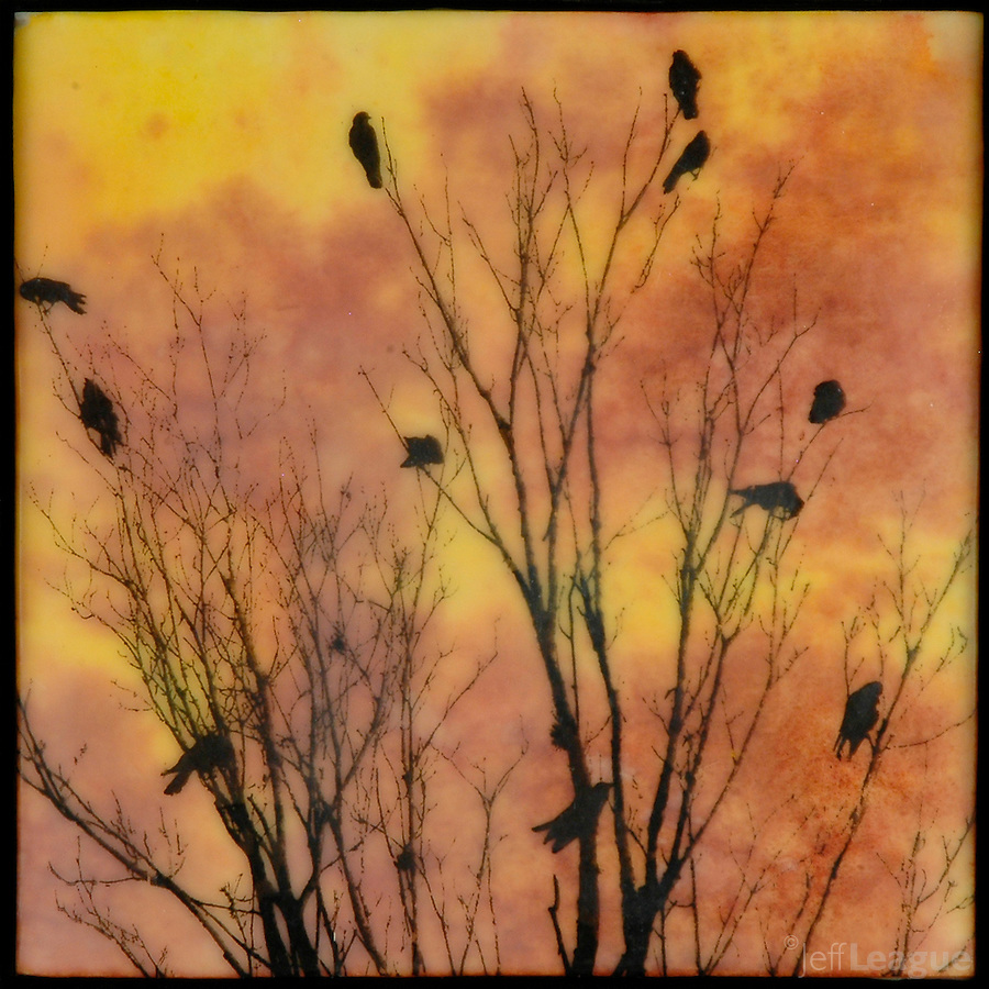 Encaustic photo transfer mixed media photography of birds in branches in sunset sky