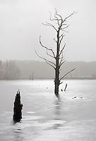 Germany, DEU, Waltrop, 2005-Mar-10: Dead trees in a frozen pond.