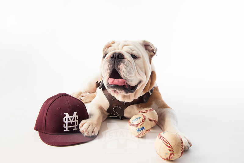 Champ (Bully XX) with baseball hat and baseballs on white studio background. <br />