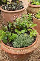 Container garden in terracotta pots with herbs thyme, parsley, nasturtium, sage, vegetable eggplant, chard, Thymus, Tropaeoleum, Salvia officinalis