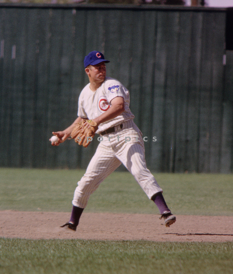 Chicago Cubs Ron Santo (10) during a game from his 1964 season. Ron Santo played for 15 season with 2 different teams, was a 9-time All-Star  and was inducted to the Baseball Hall of Fame in 2012.(SportPics)