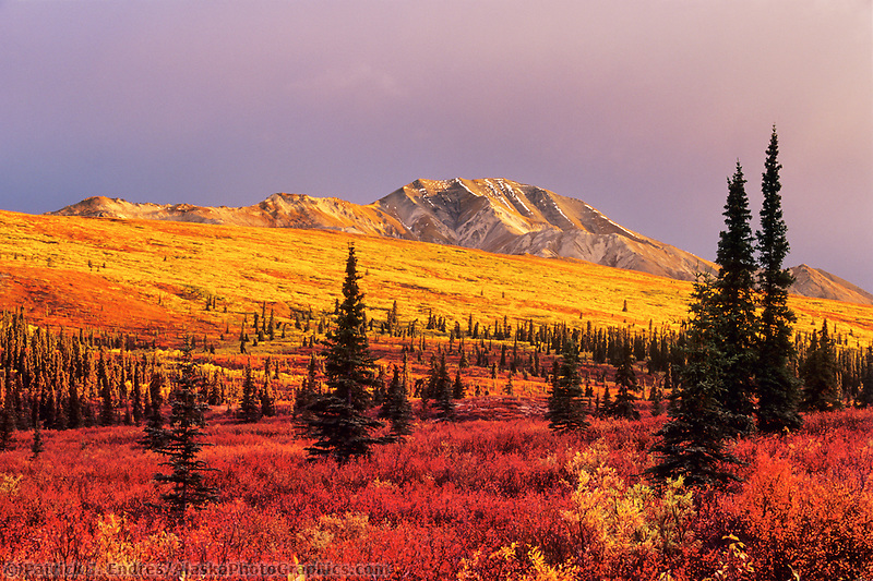 Autumn tundra and taiga in Denali National park, Alaska.