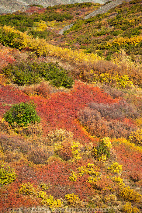 "Vibrant fall colors along the Alaska Range mountain ridge named ""Rainbow Mountain"", Interior, Alaska."